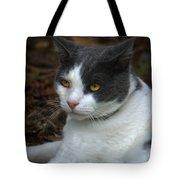 Mr. Kitty   Tote Bag