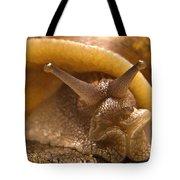 Mrs. Snail Tote Bag