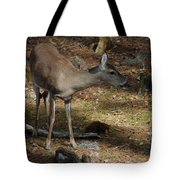 Ms Doe Tote Bag