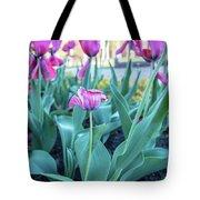 Msu Spring 33 Tote Bag