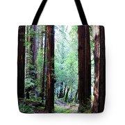 Muir Woods 1 Tote Bag