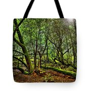 Muir Woods Rejuvenation Tote Bag