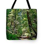 Muir Woods Study 22 Tote Bag