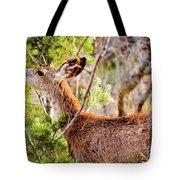 Mule Deer Foraging On Pine On A Colorado Spring Afternoon Tote Bag