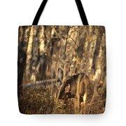Mule Deer In Aspen Thicket Tote Bag