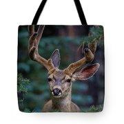 Mule Deer In Velvet 02 Tote Bag