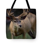 Mule Deer In Velvet 03 Tote Bag