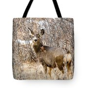 Mule Deer In Winter In The Pike National Forest Tote Bag