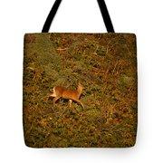 Mule Deer - Mattole Beach Tote Bag