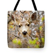 Mule Deer Portrait In The Pike National Forest Tote Bag