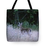 Mule Deer - Sinkyone Wilderness Tote Bag