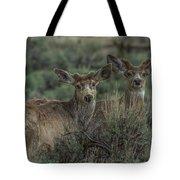Mule Deer Visitors At Sunset Tote Bag