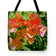Multi-colored Bougainvillea At Pilgrim Place In Claremont-california  Tote Bag