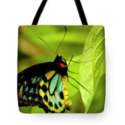 Multi Colored Buttrfly Tote Bag
