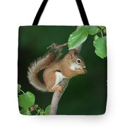 Munching Mulberries Tote Bag