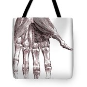Muscles, Hand, Albinus Illustration Tote Bag