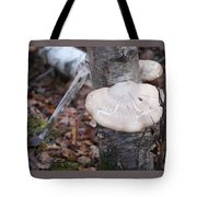 Mushroom On Birch Tote Bag