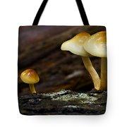 Mushroom Trio Tote Bag