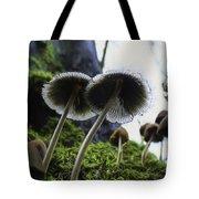 Mushrooms From Below Tote Bag