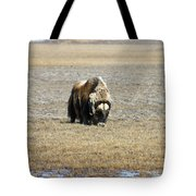 Musk Ox Grazing Tote Bag