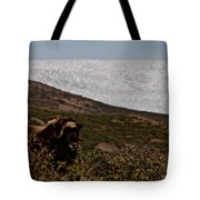 Musk Ox In Front Of Greenlandic Icecap Tote Bag