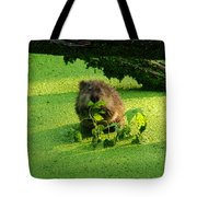 Muskrat Susie Or Muskrat Sam Tote Bag