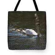 Mute Swan With Three Cygnets Following Tote Bag
