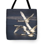 Mute Swans In Flight Tote Bag