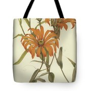 Mutisia Decurrens Tote Bag