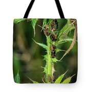 Mutualism - Ants And Treehoppers Tote Bag