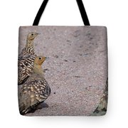 Namaqua Sandgrouse Tote Bag