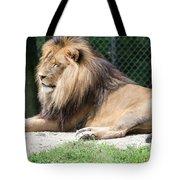 Nappin' Lion Tote Bag