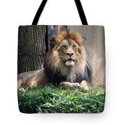 National Zoo - Luke - African Lion Tote Bag