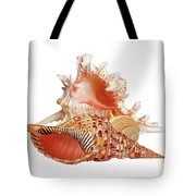Natural Shell Collection On White Tote Bag