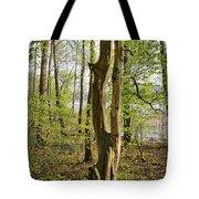 Nature, Bare Tree. Tote Bag