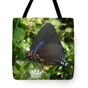 Nature In The Wild - Black Beauty Tote Bag