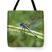 Nature Macro - Blue Dragonfly Tote Bag