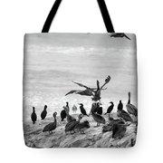 Nature Pelicans Rock  Tote Bag