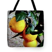 Naval Oranges On The Tree Tote Bag