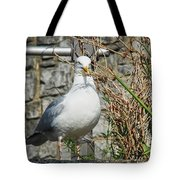 Nest Building Time Tote Bag