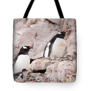 Nesting Gentoo Penguins Tote Bag