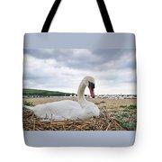 Nesting Mute Swan At Abbotsbury Tote Bag