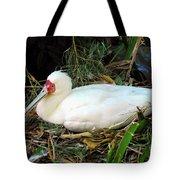 Nesting Spoonbill Tote Bag