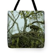 Nestlings Tote Bag