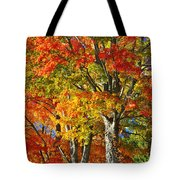 New England Sugar Maples Tote Bag