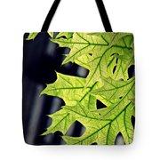 New Oak Leaves    Tote Bag
