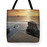 new zealand gannet colony at muriwai beach ,gannet fly from Muri Tote Bag