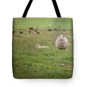 New Zealand Sheep Tote Bag