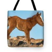 Newborn Colt Tote Bag