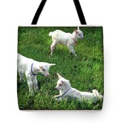 Newborn Goats Tote Bag